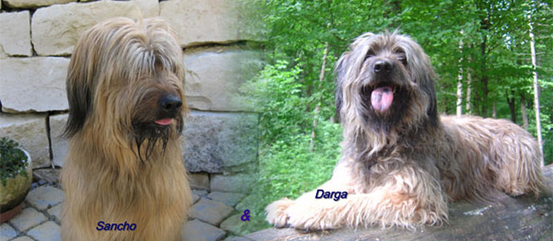 Sancho & Darga