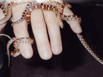 Ein Handvoll Schlangenbabys