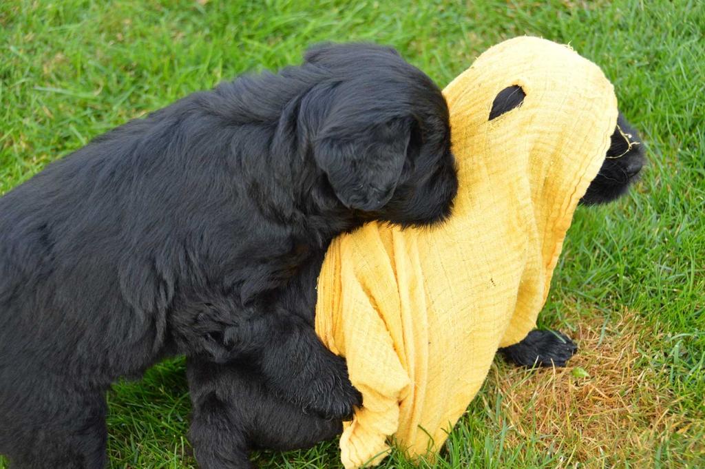 warum trägst du ein Kopftuch? Bist doch von hier....