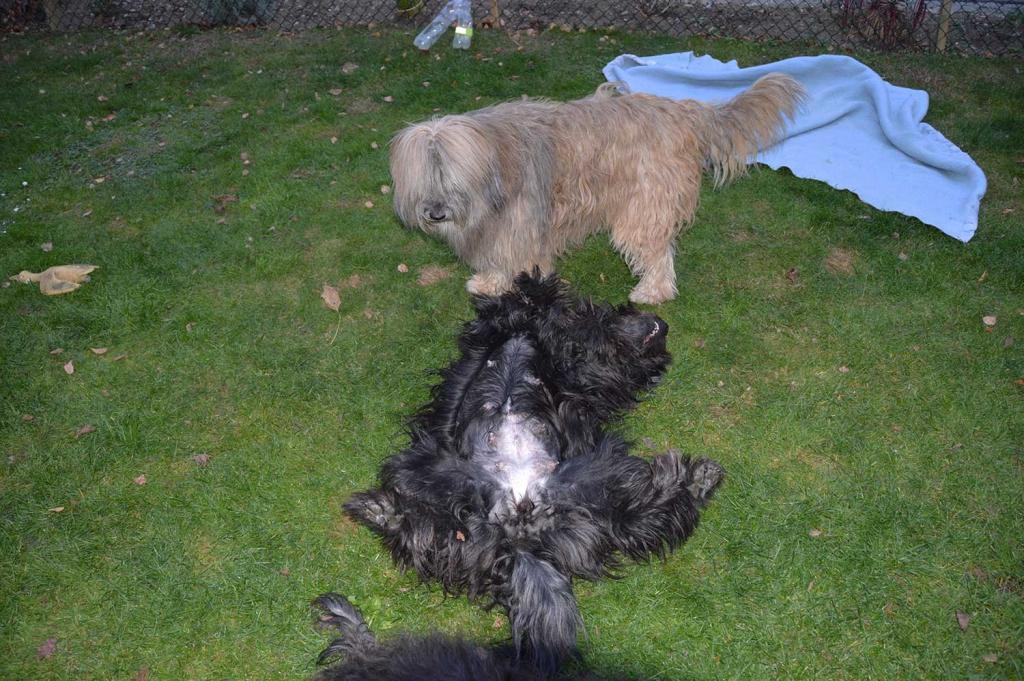 Omi spielt auch mit Mama
