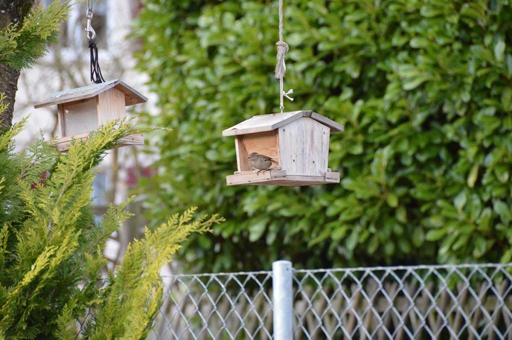 ich hab den Vogel gesehen.....
