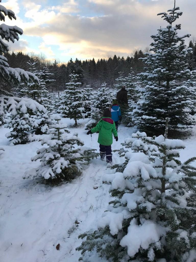 ....wir suchen einen Weihnachtsbaum