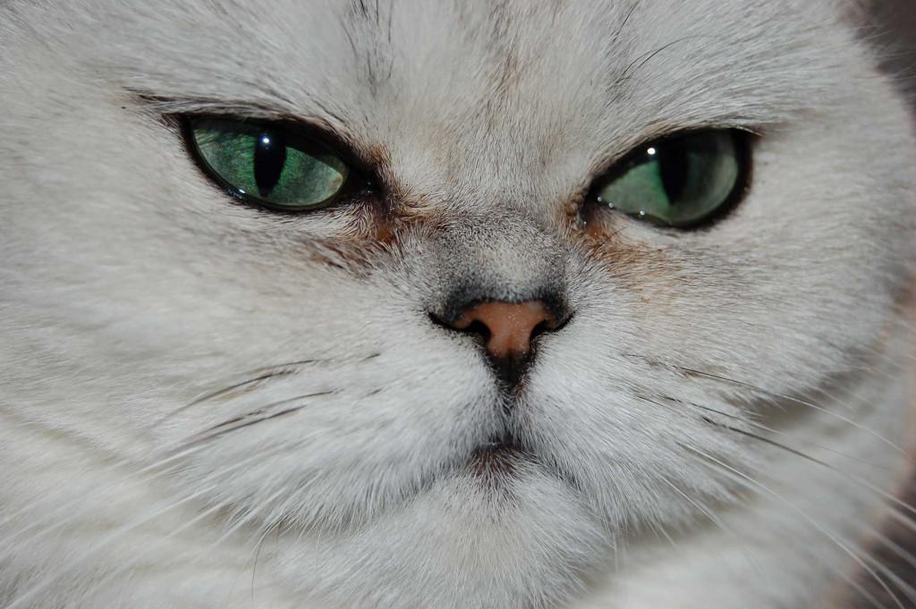 wunderschöne Augen